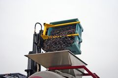 Grapes Dumped into Hopper. Close up of pinot noir wine grapes being dumped into a hopper Stock Photo