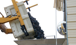 Grapes dumping into a bin for sorting. Forklift dumping bin of purple grapes into sorter for initial sorting prior to going to the crusher for wine making in Royalty Free Stock Photo