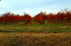 Grapes on fall stock image