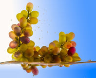 Grapes fall into the water Stock Images