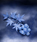 Grapes. Fantasy motive Royalty Free Stock Images