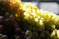 Grapes at farmers market. A pile of grapes on a farmers stand with sunlight shinying through on top Royalty Free Stock Images