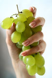 Grapes in female hands Stock Photos