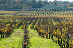 Grapes fields during winter. Fall autumn days royalty free stock photo