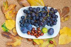 Colors of autumn in leaves and fruits. Grapes, fig, plums, jyjybe on a white plate Royalty Free Stock Photos