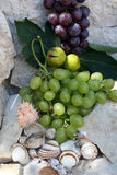 Grapes, figs and shells Royalty Free Stock Images