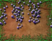 Grapes and Flourishes royalty free stock images