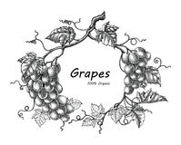 Grapes frame hand drawing vintage engraving illustration. Isolated on white background royalty free illustration