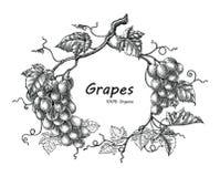 Grapes frame hand drawing vintage engraving illustration royalty free illustration