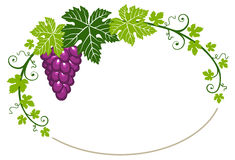 Grapes frame with leaves on white background royalty free illustration