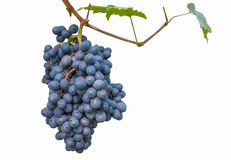 Grapes Royalty Free Stock Photo