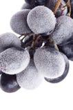 Grapes frozen. Stock Photos