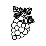 grapes fruit design. Grapes fruit icon. Healthy organic and fresh food theme.  design. Vector illustration Royalty Free Stock Images