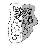 grapes fruit design. Grapes fruit icon. Healthy organic and fresh food theme.  design. Vector illustration Royalty Free Stock Photos