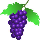 Grapes, Fruit, Food, Wine, Plant Stock Image
