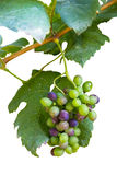 Grapes fruit Stock Photo