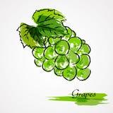 Grapes fruit Royalty Free Stock Photos