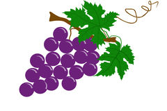 Grapes fruit - illustration Stock Photography