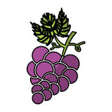 Grapes fruit isolated icon Royalty Free Stock Photography
