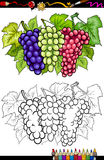 Grapes fruits illustration for coloring book Stock Photography