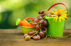 Grapes and garden toys royalty free stock photography