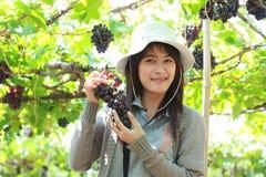 Grapes Gardener Royalty Free Stock Photography