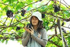 Grapes Gardener Stock Photography