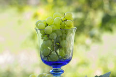 Grapes in a glass. A bunch of grapes in a glass with blurred outdoor background Stock Images