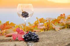 Grapes in the glass Royalty Free Stock Images