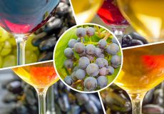 grapes, glass of wine collage branch royalty free stock photography