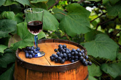 Grapes and a Glass of Wine on Oak Barrel in Vineyard Royalty Free Stock Photo