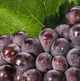 Grapes and grape leaves Stock Photo
