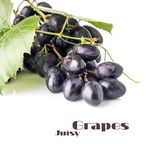 Grapes with grapevine isolated on white background. Blue ripe grape with copyspace Royalty Free Stock Photos
