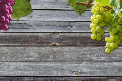Grapes on a grapevine with wood background stock image