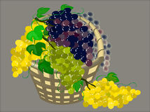 Grapes in a gray basket. vector Royalty Free Stock Photography
