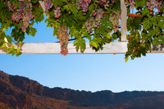 Grapes in Greek island Hydra Stock Photography