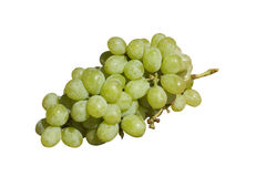 Grapes-green Stock Image