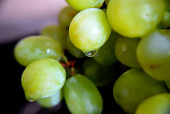 Grapes green with drops of water macro Royalty Free Stock Image