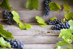 Grapes with green leaves background Stock Photography