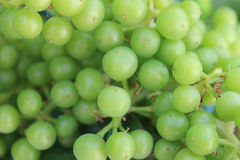 Grapes on green Royalty Free Stock Photo