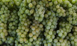 Grapes green, retail of delicious green grapes stock photography