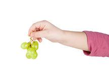 Grapes in hand Stock Photography
