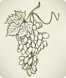 Grapes, hand-drawing, vector illustration. Royalty Free Stock Images