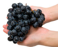 Grapes in hands. Bunch of grapes in woman's hands. Isolated on white Stock Photography
