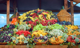 Grapes harvest. Baskets full of multicolor grapes Royalty Free Stock Photo