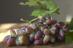 Grapes Harvest. The combination of unique texture and sweet, tart flavor has made grapes an ever popular between-meal snack as well as a refreshing addition to Stock Photo