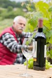 Grapes harvest winemaker in vineyard. Close royalty free stock photography