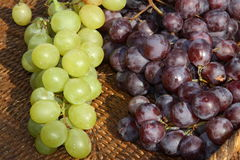 Grapes after the harvest in the winery Royalty Free Stock Photography