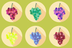 Grapes icon. Icons  on white background. Bunches of grapes. Stock Images