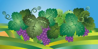 Grapes illustration Stock Photo
